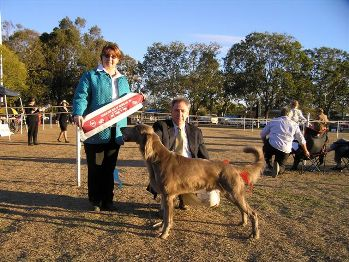 BEST IN SHOW -  Aust Ch Happylea Kings Silver (LH)