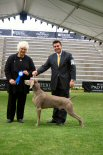 Click to Enlarge - Best of Breed: Am/Aust Ch PewteRun Greydove Black Magic