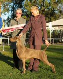 Click to Enlarge - Runner-Up Best of Breed: Ch Kadma Angel Dust